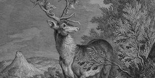 Darstellung eines Hirschs im Kirchheimer Wald.