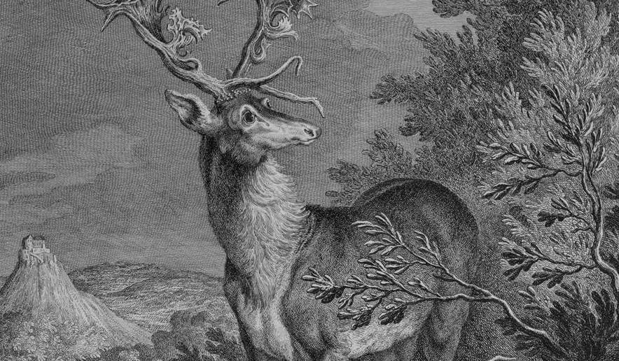 Illustration of a stag in Kirchheim Forest